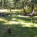 There are several backcountry campsites along Cascade Creek.- Cascade Creek Trail