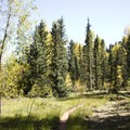Meadow and pine forest along the Cascade Creek Trail.- Cascade Creek Trail