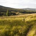 Grassland near the Lizard Head Trailhead near Wilson Meadows.- Wilson Meadows