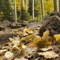 Fall foliage along the Lizard Head Trail to Wilson Meadows.- Wilson Meadows