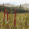 Unidentified species (help us identify it by providing feedback).- Wilson Meadows