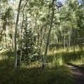 Aspen near the junction of the Mill Creek and Sneffels Highline Trail.- Sneffels Highline
