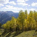 Aspen along the Sneffels Highline Trail.- Sneffels Highline