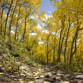 Aspen and fall foliage along the Sneffels Highline Trail.- Sneffels Highline