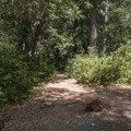 Various paths between sites cut through the trees and brush to access the loop more easily.- Patrick's Creek Campground