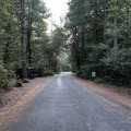 Road to camp entrance.- Patrick's Creek Campground