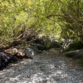 Shady spots make a great spot to store gear or nap in the shade.- Panther Flat Pools
