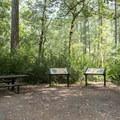 Parking area and interpretive site.- Patrick's Creek Swim + Picnic Area