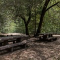 Shaded picnic area at Patrick's Creek Swim and Picnic Area.- Patrick's Creek Swim + Picnic Area
