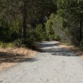 The gravel road running through the campground.- Madrona Campground
