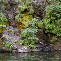 Verdant walls and clear water along the Smith River.- Sandy Beach