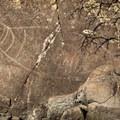 Petroglyph from the Coast Salish First Nation.- Coast Trail: Aylard Farm to Beechey Head