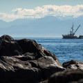 A large fishing boat in the Strait of Juan de Fuca.- Coast Trail: Aylard Farm to Beechey Head