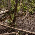 The bog is very muddy, even in the driest months of the late summer.- Canso Plane Crash Hike