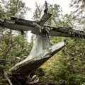 The tail end of the plane sticking out of the forest.- Canso Plane Crash Hike