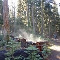 Steam rises from the forest floor after a cold night.- Union Peak