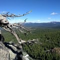 Weather-sculpted trees take root on the upper mountain.- Union Peak
