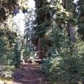 The Pacific Crest Trail provides a pleasant and quiet access trail to Union Peak.- Union Peak