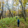 Walking back down Jenkins Meadow.- Joyce Kilmer-Slickrock Wilderness Loop