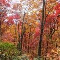 Autumn in full bloom.- Joyce Kilmer-Slickrock Wilderness Loop