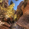 Fall colors along the Kanarra Creek Trail.- Kanarra Creek Trail to Kanarraville Falls