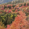 There are some amazing autumn colors on the Stewart Falls Trail.- Stewart Falls Trail