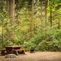 Lush rainforest surrounds each campsite. - Goldstream Campground