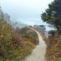 Last bit of trail to Enderts Beach.- Enderts Beach
