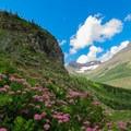 Many flowers along the trail.- Bullhead Lake
