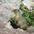 Furry critters will try to beg for food.- Bullhead Lake