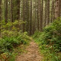 Walking through a thick, luscious forest to Carruthers Cove.- Carruthers Cove
