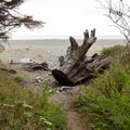 The trail opens up to the beach.- Carruthers Cove