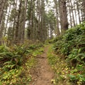 Hiking back up the steep trail.- Carruthers Cove