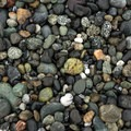Pretty pebbles washed up on the beach.- Carruthers Cove