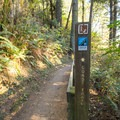 The short path to the viewpoint is part of the Oregon Coast Trail.- Natural Bridges Viewpoint