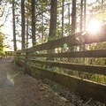 The sun shines through the forest and the guard rail.- Natural Bridges Viewpoint