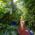 Path through the palm grove.- Jardin Majorelle