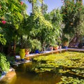 The water lily pool.- Jardin Majorelle