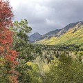 Red maple and yellow aspen along the Alpine Loop Scenic Drive.- Alpine Loop Scenic Drive