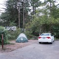 Standard tent site for the campground.- Harris Beach State Park Campground