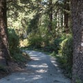 Typical pathway to the bathroom.- Harris Beach State Park Campground