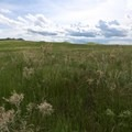 360 degree views of big skies, native prairie and wildflowers.- Bison Trail