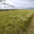 Expansive prairie views in all directions.- Bison Trail