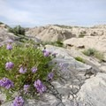 Wildflowers line the trail in Toadstool Park.- Bison Trail