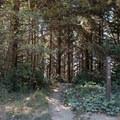 Trailhead to Thomas Creek Beach.- Thomas Creek Beach