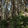 The trail begins descending quickly through the forest.- Thomas Creek Beach