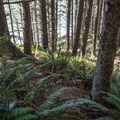 The descent through ferns can be confusing as some spur trails exist.- Thomas Creek Beach