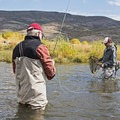 Netting a brown trout on the Middle Provo River.- Middle Provo River