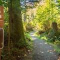 Beach access trail.- French Beach Campground