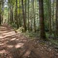 Regional Trail is a steady climb with a few steep bits.- Hartland Mountain Bike Trails